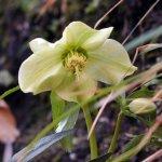 P1010255 - Candalla, il cuore verde dei monti del Camaiorese.