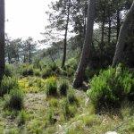 P4061717 FILEminimizer - Settimo Andreoni : lo scultore dei boschi di Montemagno