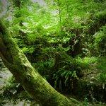 P6080220 - Candalla, il cuore verde dei monti del Camaiorese.