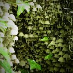 P6080241 - Candalla, il cuore verde dei monti del Camaiorese.