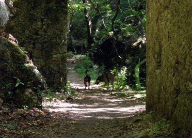 P6270073 - Candalla, il cuore verde dei monti del Camaiorese.