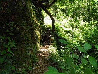 P6270085 - Candalla, il cuore verde dei monti del Camaiorese.