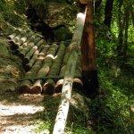 P6270088 - Candalla, il cuore verde dei monti del Camaiorese.