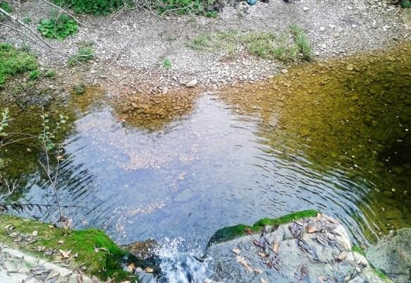 dallalto - La foresta dei mille occhi ovvero Caselli e la cascata dello Sterza