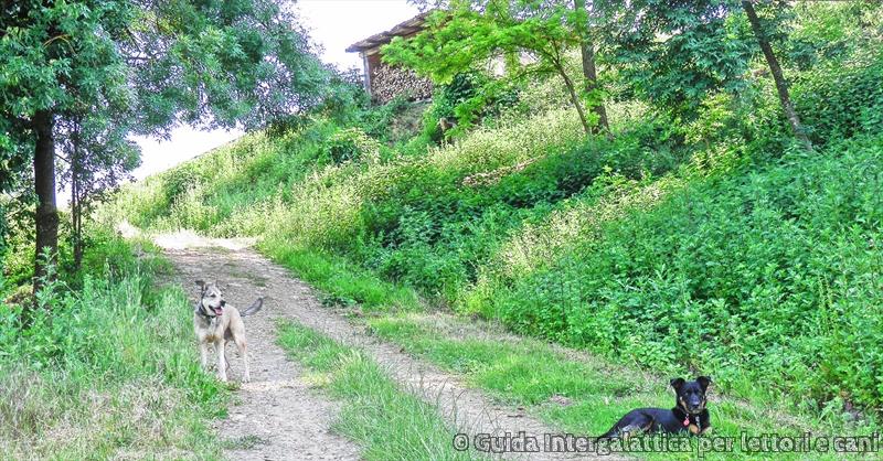 relax con Das e Furia Buia - Cammino degli Dei primo giorno : falsa partenza e via verso Badolo