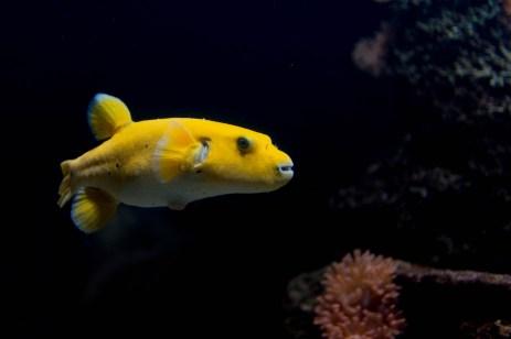 Een aardige vis