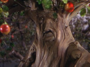 Grumpy, apple-throwing talking tree from the Wizard of Oz
