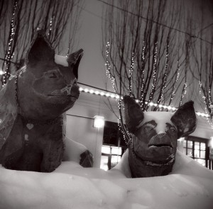 Chilly Pigs