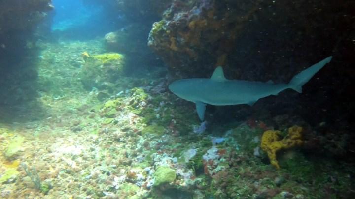 Shark Canyon