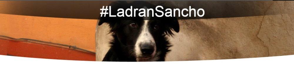 Blog sobre mascotas (mentira!! es sobre perros!)