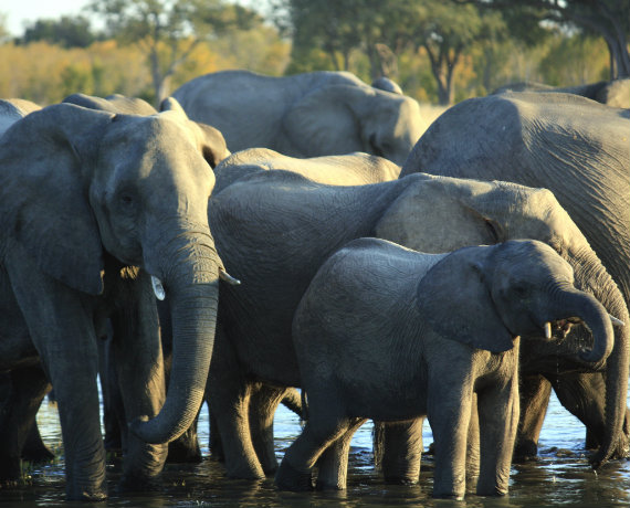 How To Make a Difference on World Elephant Day