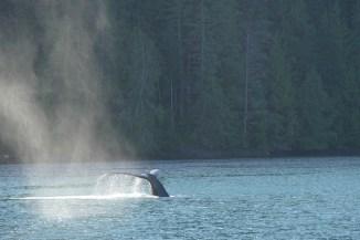 whale-050