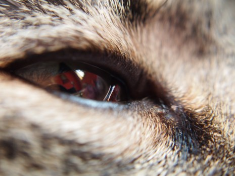 reflection in his eye