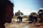 Olifant Zuid-Afrika