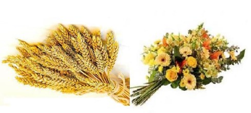 gerbe-blé-fleurs