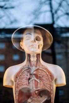 nouveaux corps - corps humain