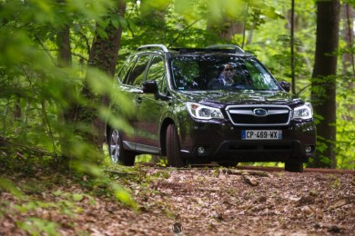 Forester 15