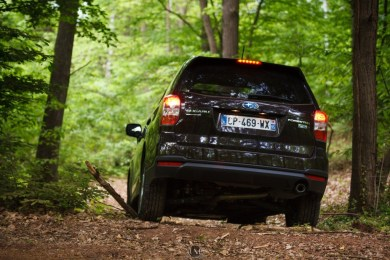 Forester 16