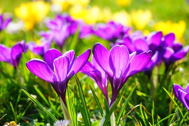 ブログ用の写真、花を撮影する時のコツ、地面から撮ってみる