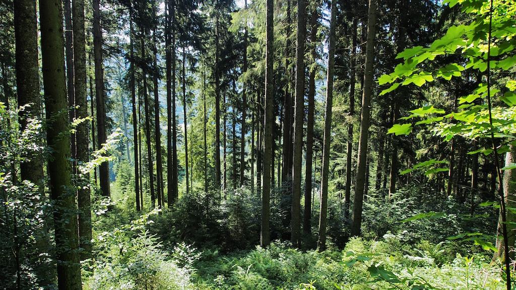 Nordschwarzwald - Murgleiter