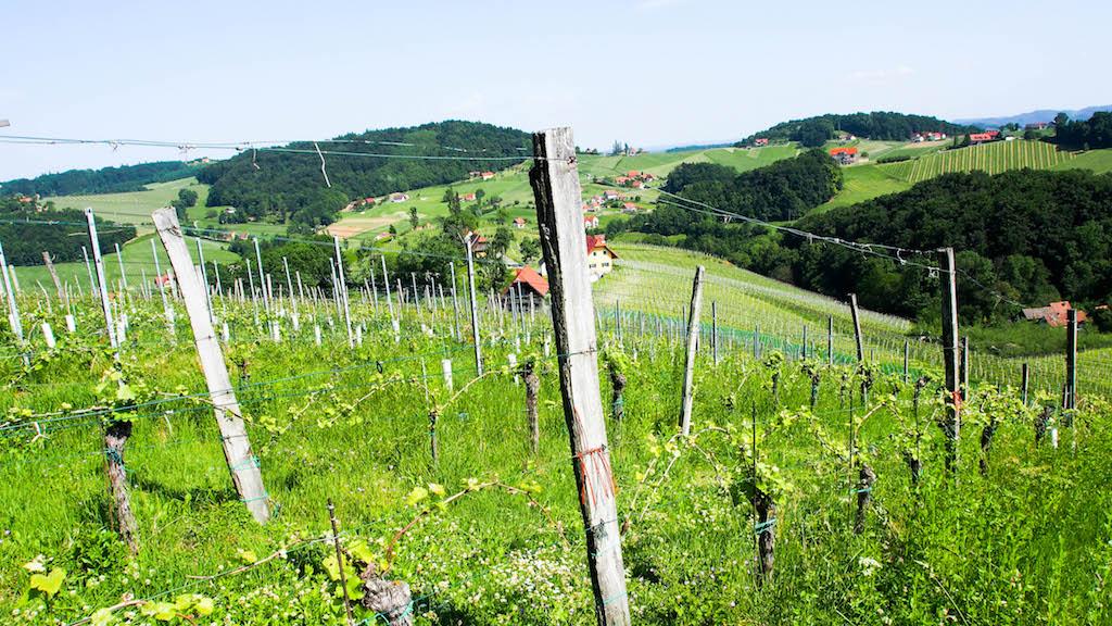 Weingut Maitz