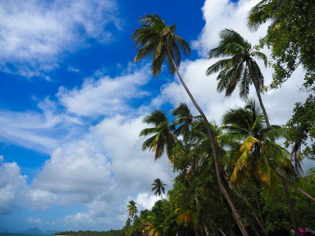 Martinique 2016 ©Michael André Ankermüller