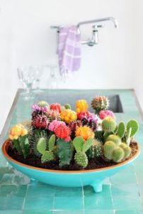 cactus_suculentas_terrarios_1