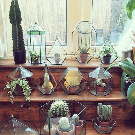cactus_suculentas_terrarios_19