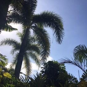 Cairns Australien (2)