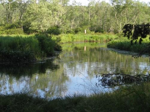 Canoeing along, peacefully
