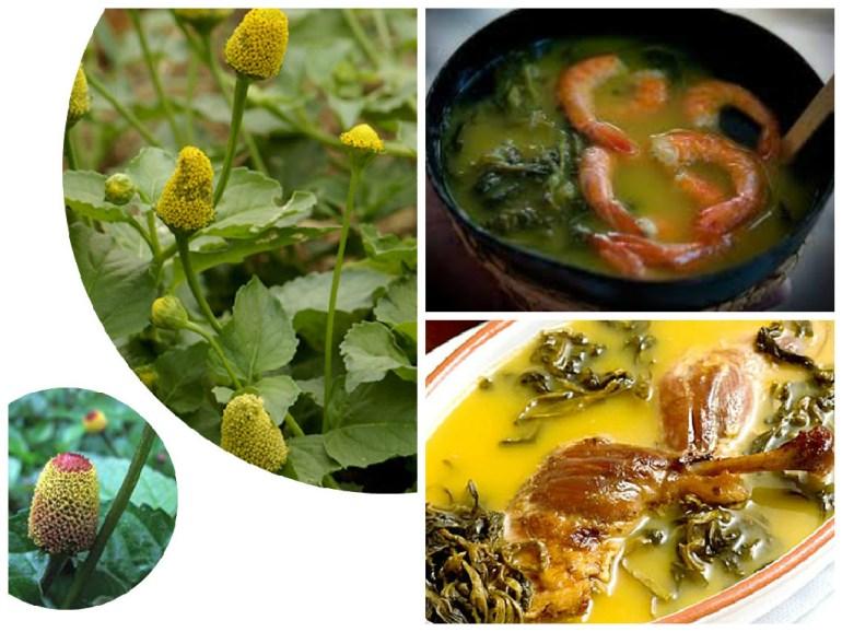 À esquerda: folhas e flores do jambu. À direita, no canto superior, o Tacacá e inferior, o Pato com Tucupi.