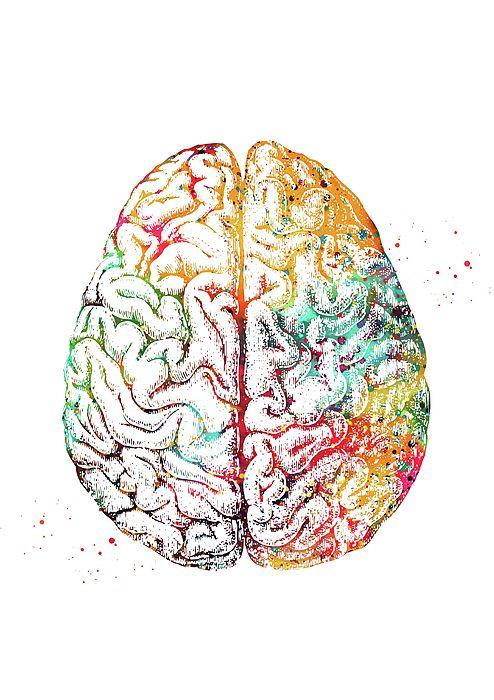 Cérebro r mapas mentais