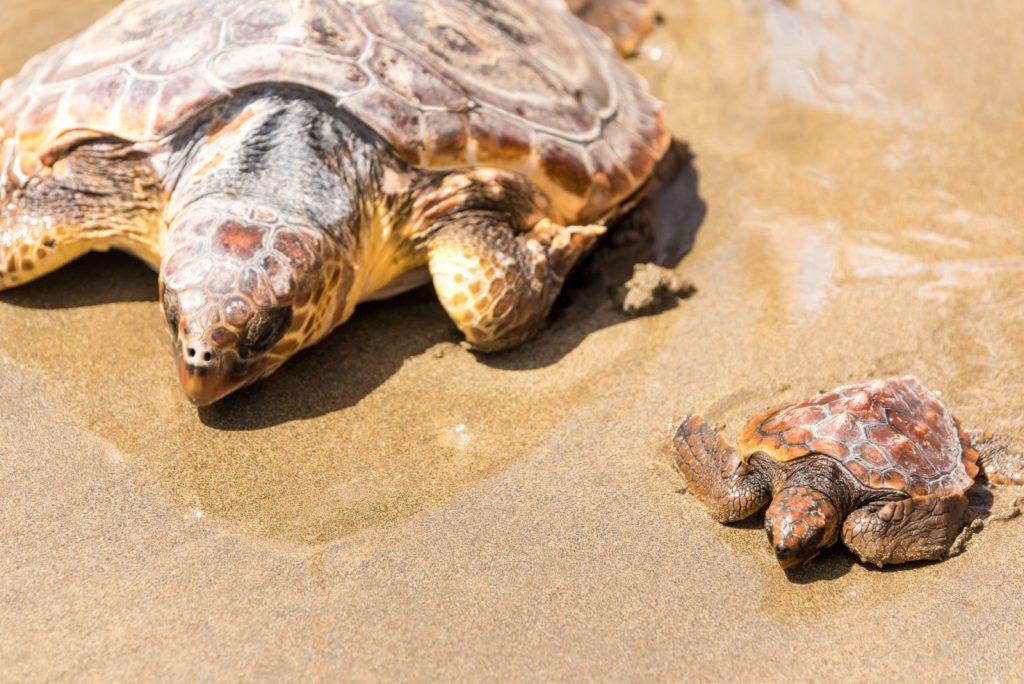 lições para aprender com as tartarugas marinhas