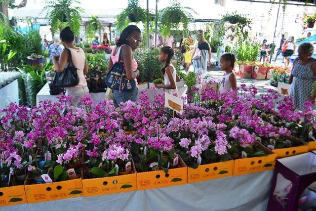 Feira de flores de Holambra - foto Silvio Tito (2)