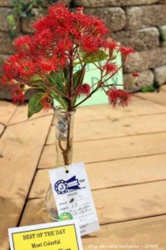 blog flores 4 - san diego