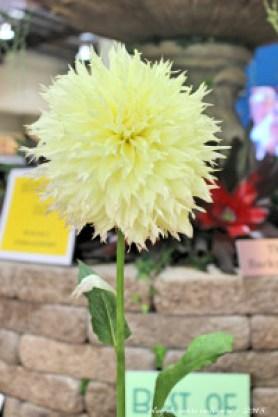 blog flores 5 - san diego