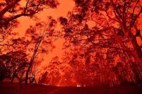 Incêndios na Austrália mataram ao menos meio bilhão de animais, diz estudo  - 03/01/2020 - UOL Notícias