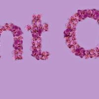 Orquídea Radiante: A cor de 2014!