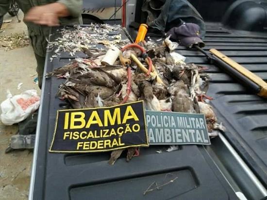 Resultado de imagem para Nove pessoas são detidas pelo IBAMA e Polícia Ambiental por caça a arribaçãs