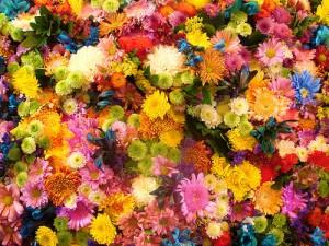 Variedad de Flores en Boda
