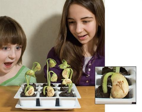 Dinosaur-Magic-Bean-Planter-Kit