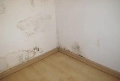 dezumidificator pentru Pete de mucegai pe pereti si tavane