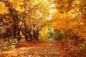 otono-paisaje-bosque-2