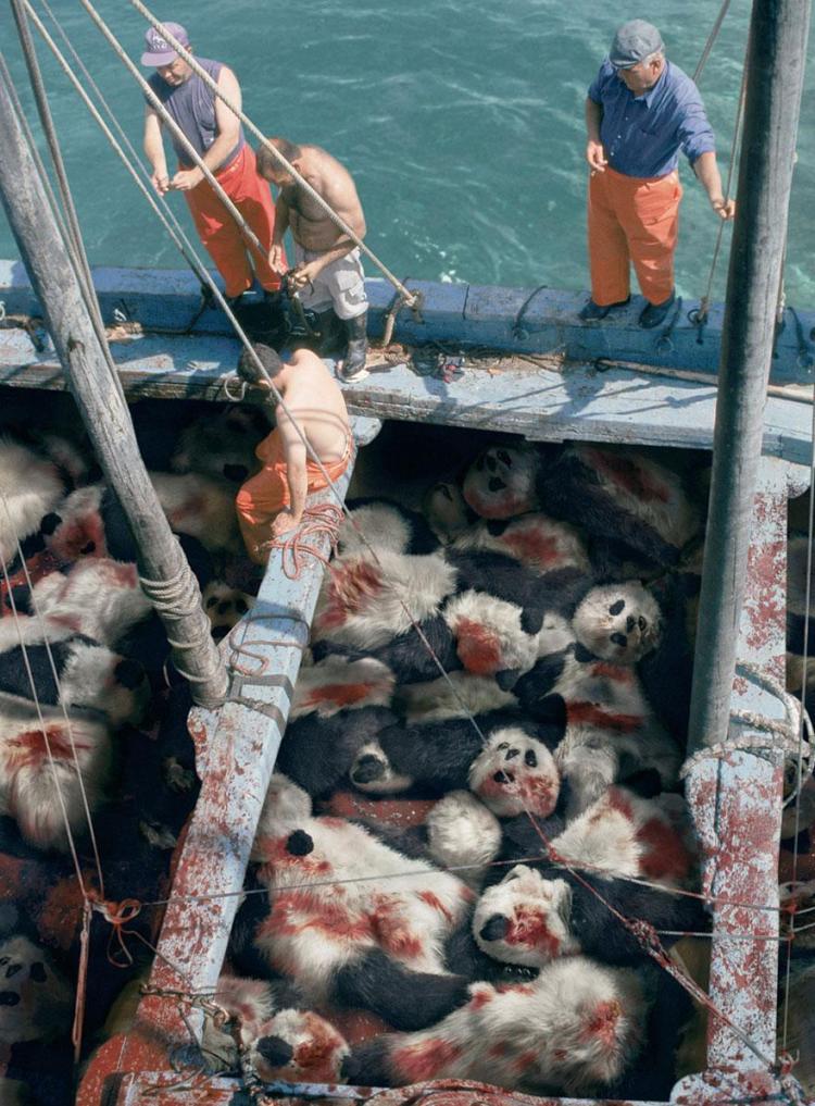 Sociedad de consevación del mar: cuando veas un atún, piensa en un panda