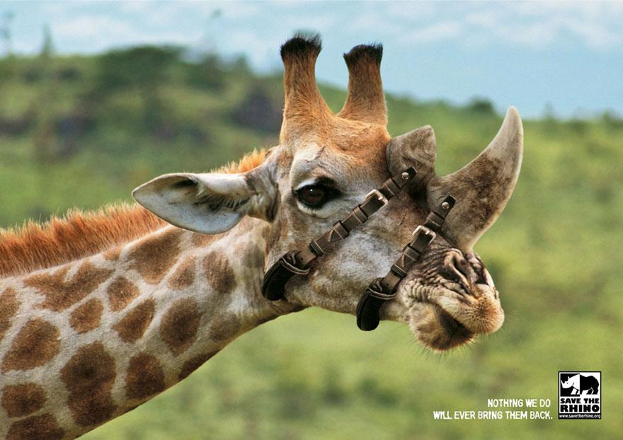 Salvemos al rinoceronte: Nada que hagamos podrá traerlos de vuelta