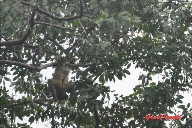 Excursión por el archipiélago de Bocas del Toro viendo los monos perezosos. En Blog de Viajes, Bocas del Toro con niños