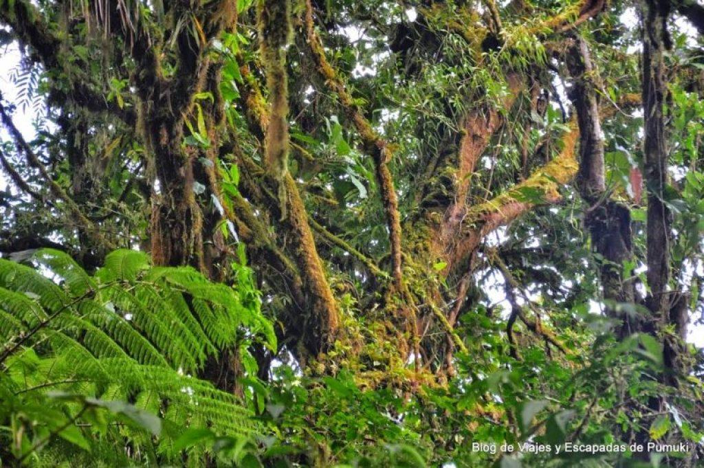 Vegetación del Bosque Nuboso con gran cantidad de musgos