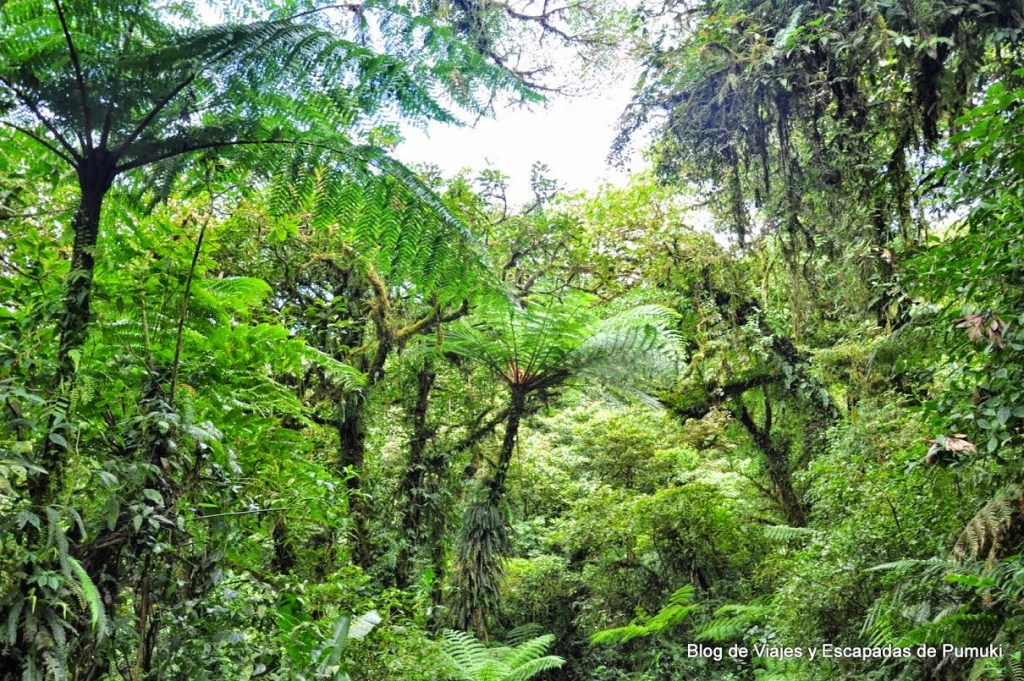 Epifitas en la vegetación de Bosque Nuboso