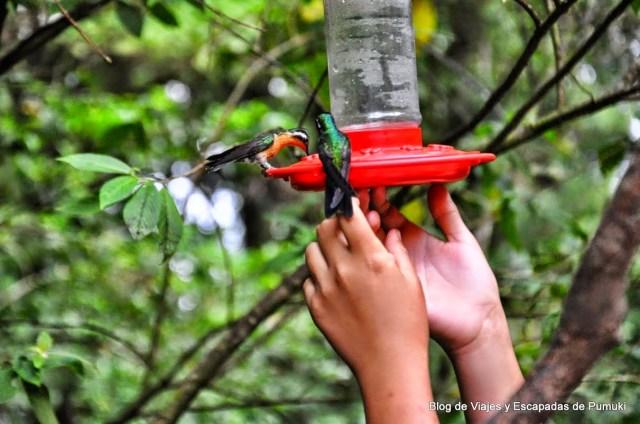 En Monteverde es posible vivir la experiencia de la interacción con colibries.