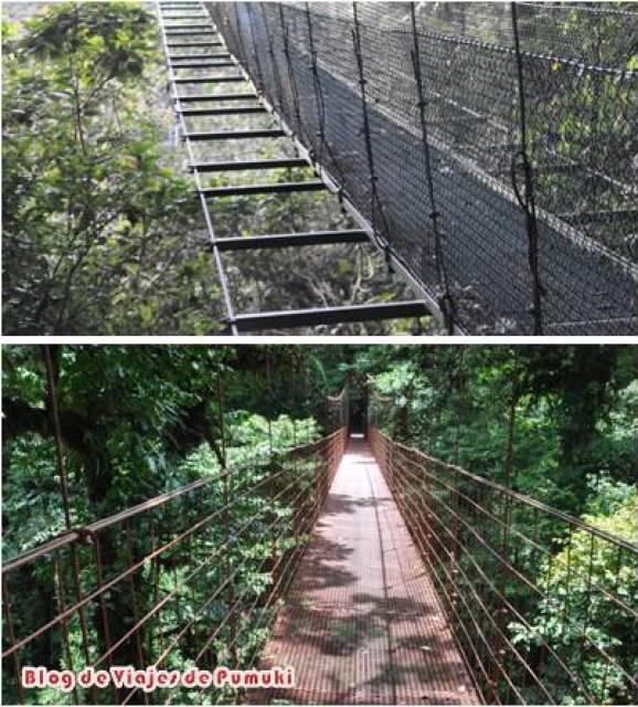 Entre las actividades que se pueden realizar en Monteverde están las pasarelas para observar el bosque desde arriba.